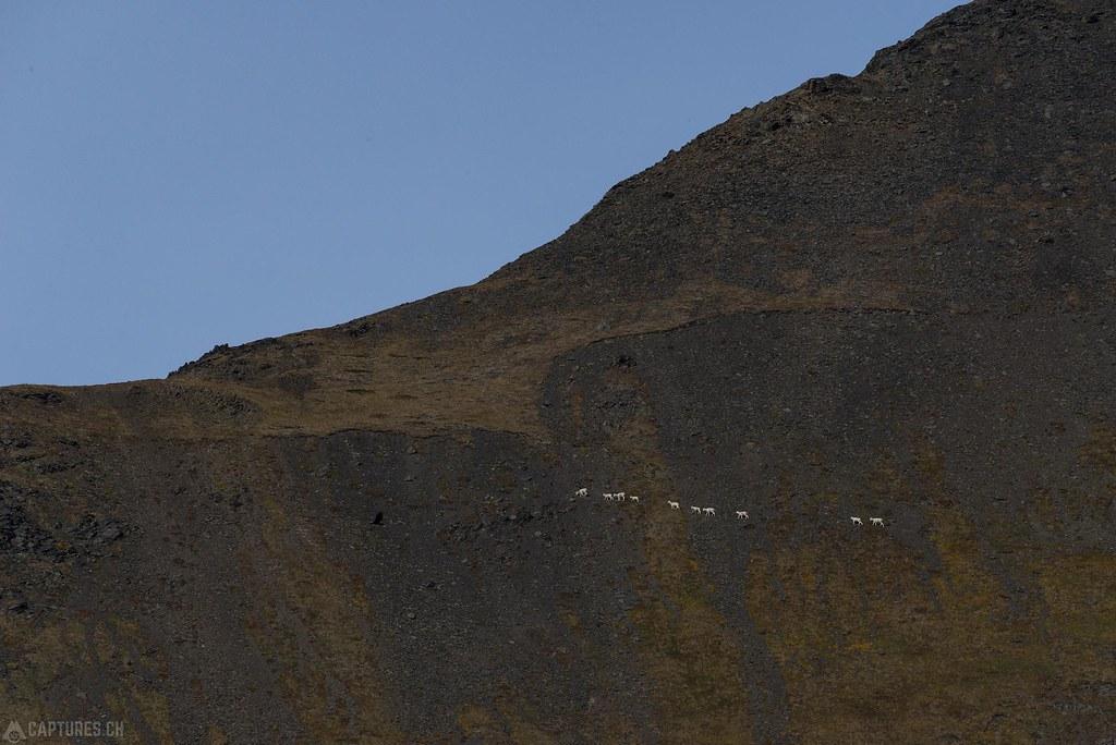 Dallshepp line - Alaska