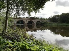 Coldstream Bridge from Jacob's Well Woodland, Aug 2018