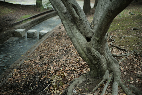 Root of a tree