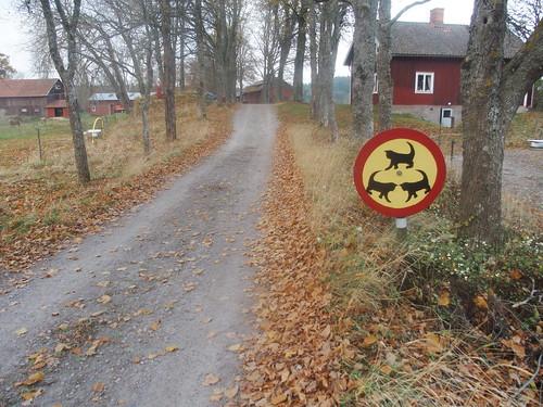 SÖ E49 Vilda djur