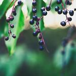2018:08:23 19:13:58 - Vogelfutter - Garden Fruit Bokeh