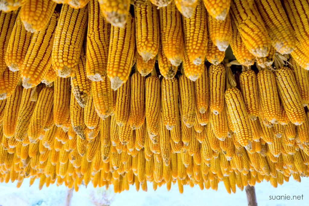 Sapa trekking - corn
