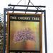 Cherry Tree, Stambridge.