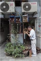 Hutongs in Shanghai