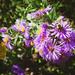 Butterfly Garden in the Fall (2)