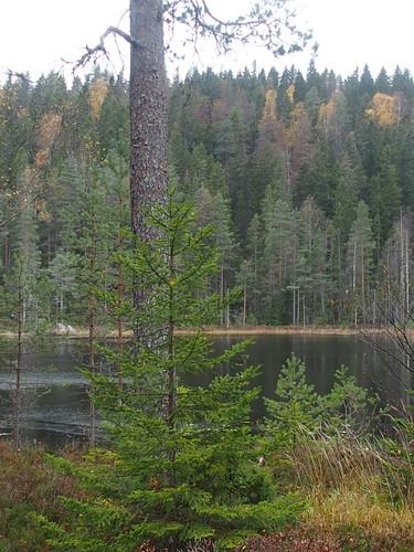 BR E21 Laxsjön