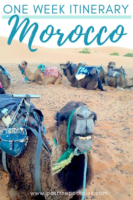 A line of camels resting in the desert: One week in Morocco itinerary