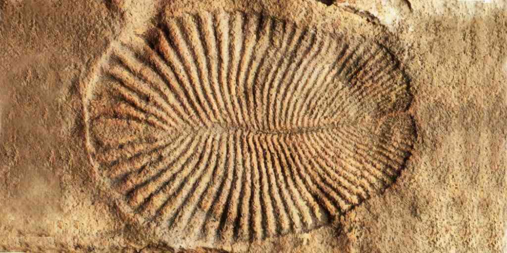 dickinsonia-animal-terre-fossile