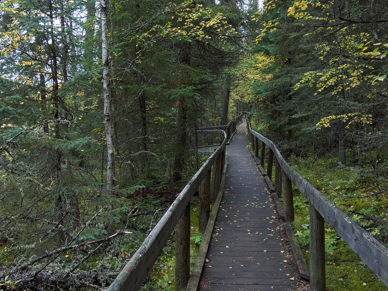 Prince Albert National Park: Waskesiu River Trail