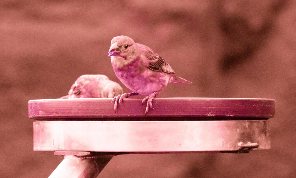 Bird3 (UV)_41