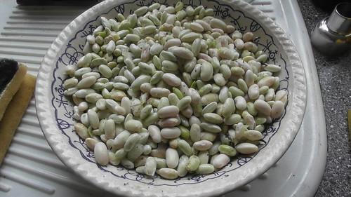 shelled beans Aug 18 (1)