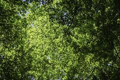 Särö Forest 6