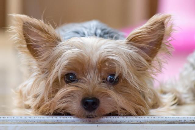 きちんと健康管理されている犬