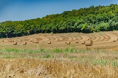 06-Géométrie agricole - Photo of Coutures