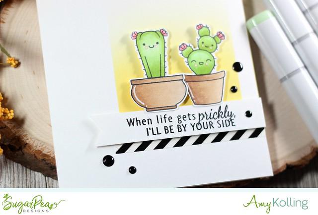 Cuddly Cacti2