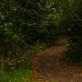 Pathway to bogart wood.