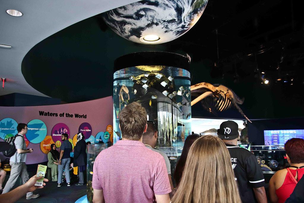 1 sept 2018 aquarium-3