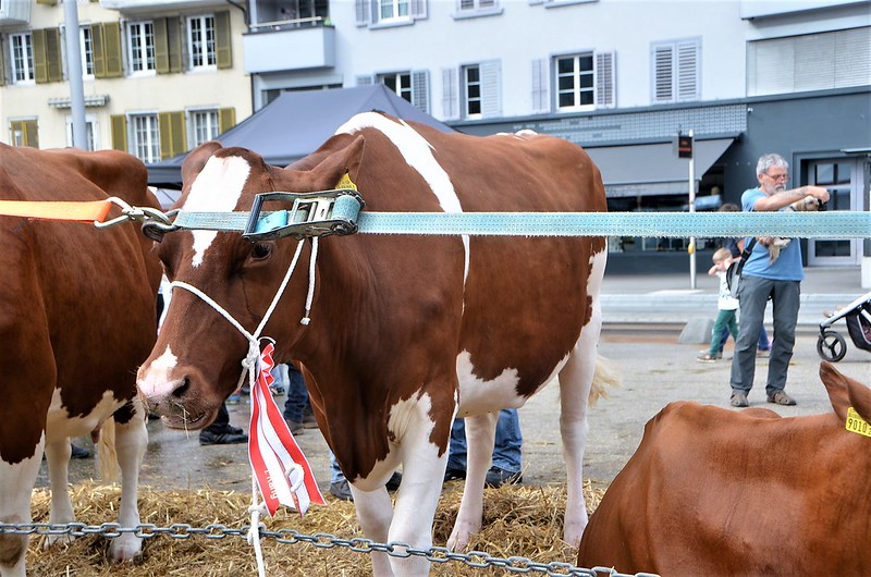 Cheese Days Solothurn 06.09 (23)