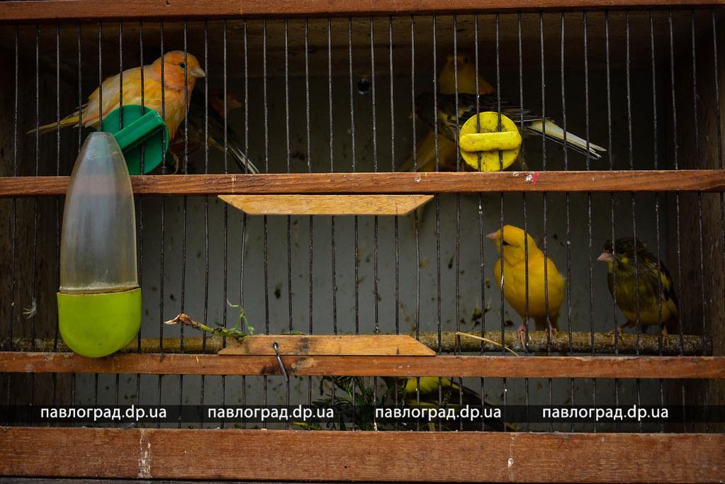 pticu -138