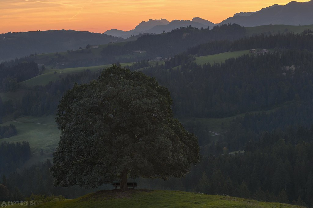 Morning by the tree - Emmental