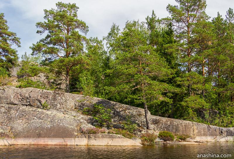 Сосны на скалах, остров Хонкасало, Ладожское озеро