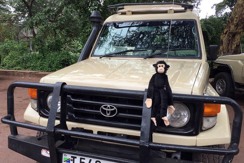 Monkey and the Land Cruiser