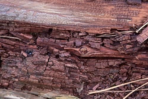 Im Loher Gehege - altes Holz; Lohe-Föhrden (11)