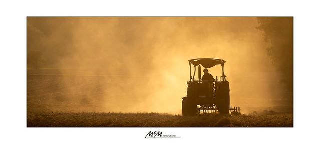 Staub in der Dämmerung -  Dust in the dusk