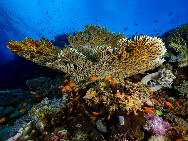 Coral Reefs Live, Olympus E-M1, Lumix G Vario 7-14mm F4.0 Asph.
