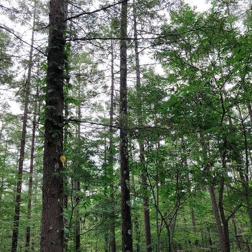 駒出池キャンプ場の林間