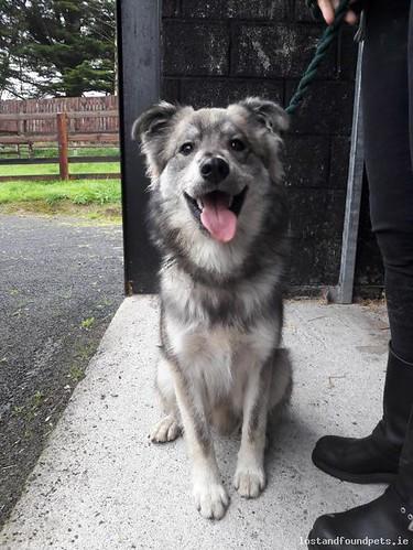Sat, Sep 8th, 2018 Found Male Dog - Carragh View, Carragh, Kildare