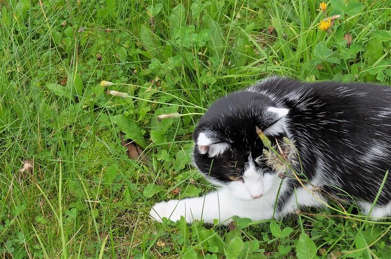 Как кошечка Фрося мышку поймала