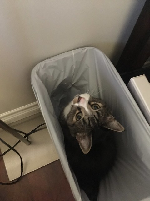 Watson thinks the new garbage can is good place to hang out