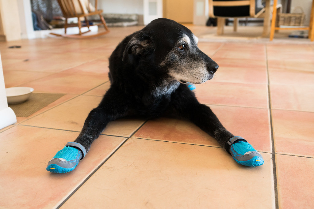 Our dog Ellie lies on the tile with dog shoes on all four paws, the soles are made of Vibram like my hiking shoes
