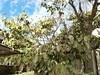 Photo:平成30年西日本豪雨 岡山県倉敷市真備町で災害ボランティア(援人 2018年 0824-26便) By jetalone