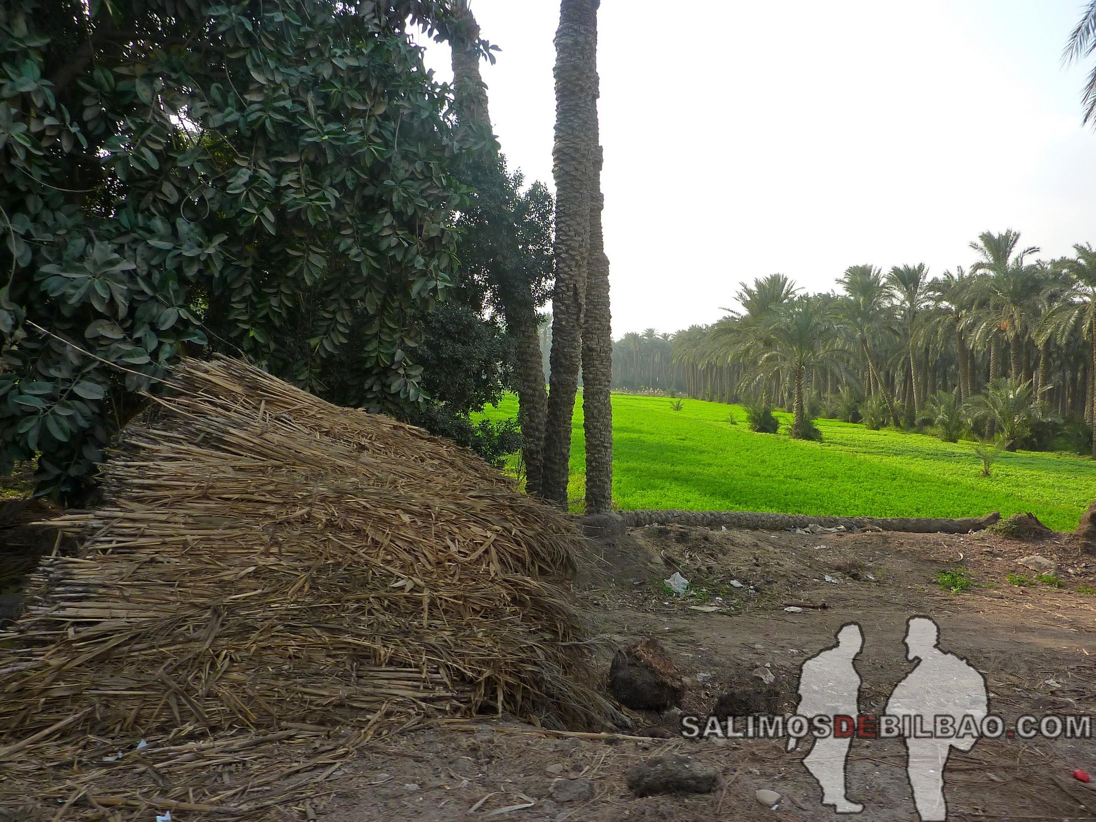 0207. Carretera de Pirámides a Saqqara