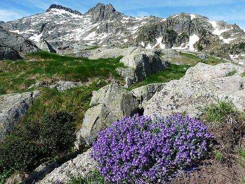 NP Aigüestortes i Estany de Sant Maurici: Rozkvetlé jarní Pyreneje