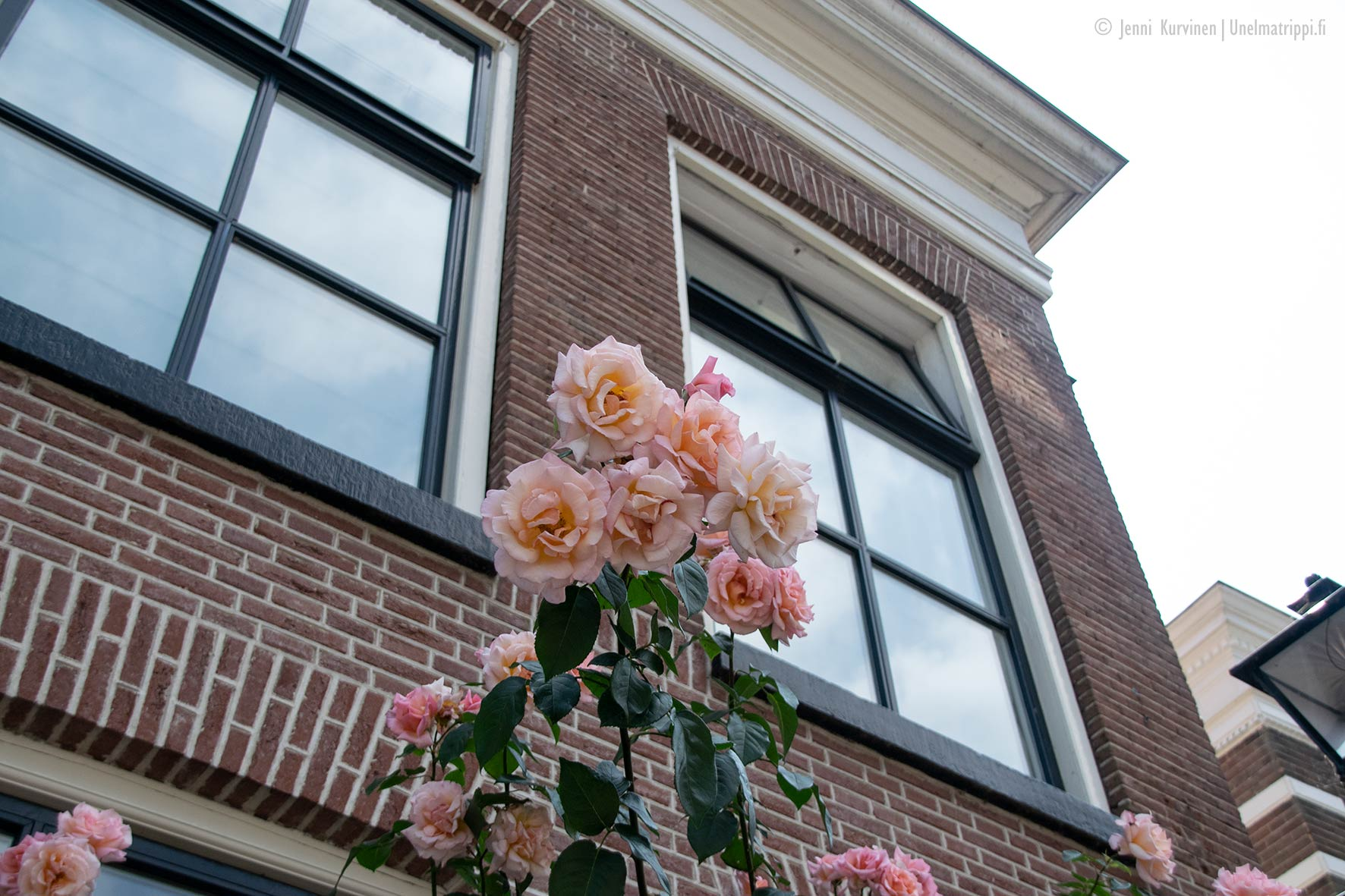Kukkia ja punatiilinen talo Zwollessa Alankomaissa