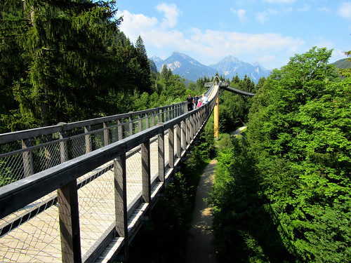 walking between treetops with alps in background