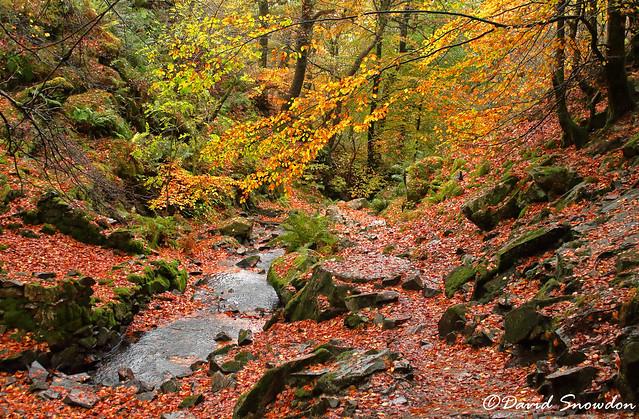 Autumn Colour, Canon EOS 1100D, Canon EF-S 18-55mm f/3.5-5.6 III