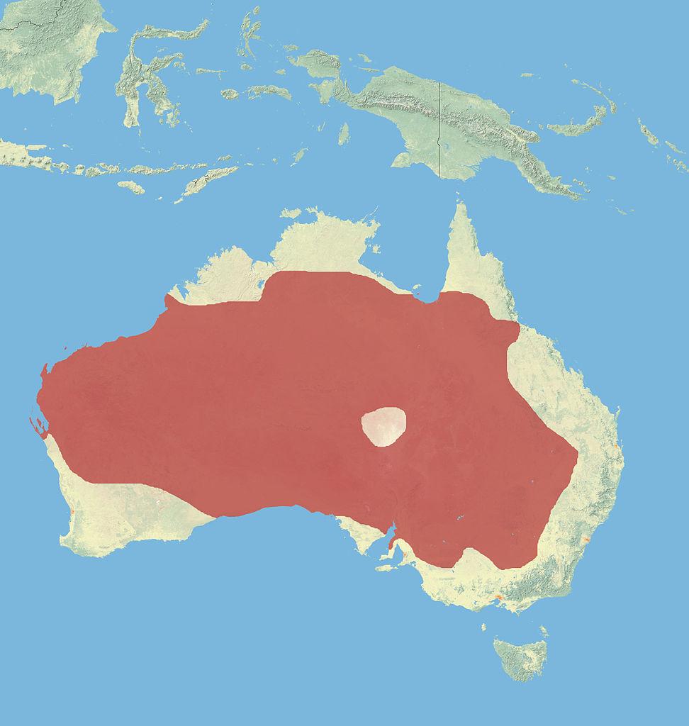 Range of red kangaroos (Macropus rufus)