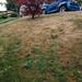 My lawn is suffering