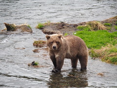 Alaska_BrooksFalls_20180824-161800_PALE7860#