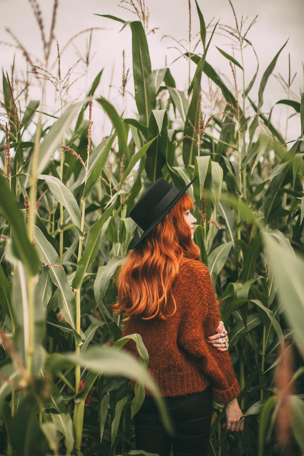corn field-29