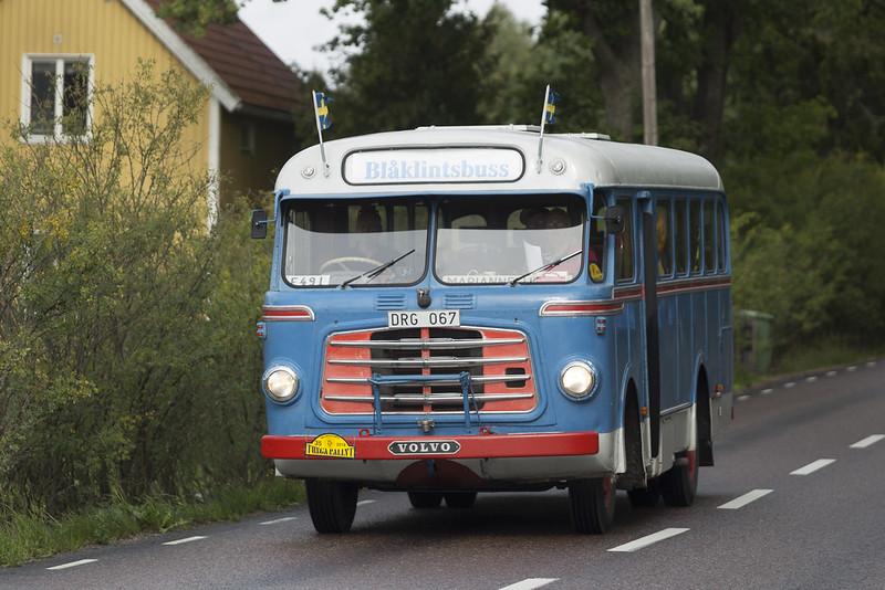Blåklintsbuss