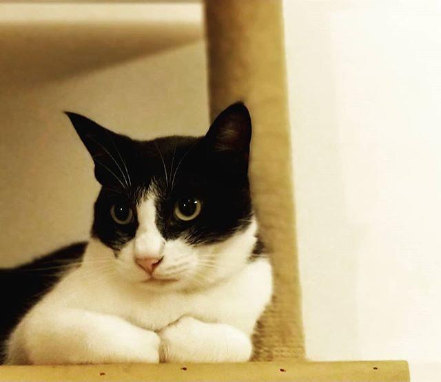 20180919 兩年前的今天 我們從彰化永靖 帶回黑糖蜜😺 謝謝你來我們家💕💕 #戴家日常 #戴家黑糖蜜 #cats #livingwithcats