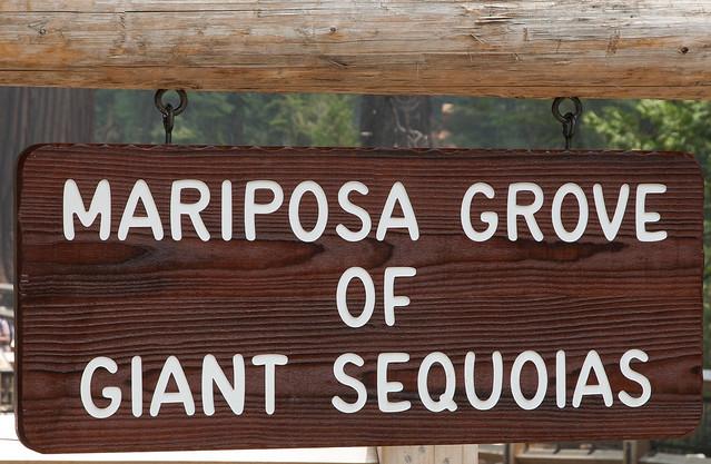 Mariposa Grove Yosemite N, Nikon D90, AF-S DX VR Zoom-Nikkor 16-85mm f/3.5-5.6G ED