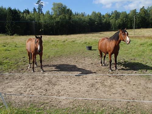 SÖ E53.1 Hästar