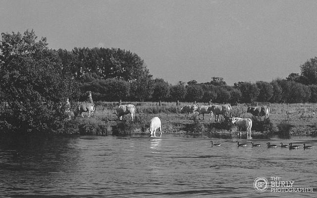 Pastoral Thames