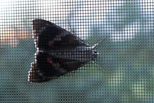moth on the window